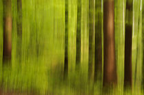 'Blurred spring forest' von Thomas Matzl