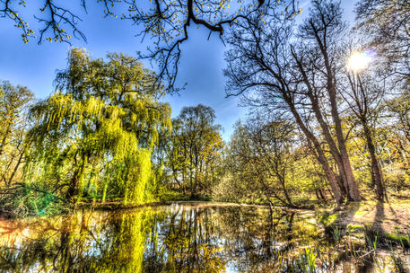 Willow-tree-pond