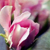 Subtle Rose von Gisela Kretzschmar