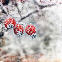 Winter von Gisela Kretzschmar