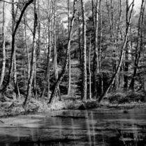 Trees and lake by Marcin Olesinski