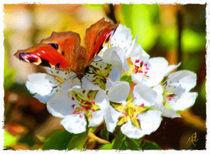 Butterfly on fresh flowers von Wolfgang Pfensig