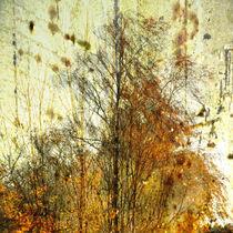 Birkengruppe im Herbst-Birch Group in autumn von Chris Berger