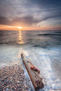 Strandgut von markusBUSCH FOTOGRAFIE