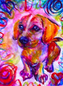 Rainbow Chiweenie von Andrea Sher
