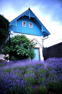 baby-blue meets lavender von Thomas Matzl