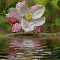 Frühling - BlütenWasser by Chris Berger
