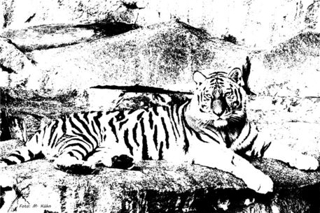 Panthera
