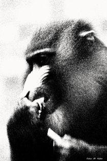 Der Primat, wild und mächtig! by malin