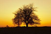 Leafless Tree Against Sunset by Sharon Foelz