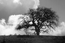 Old Oak Against Cloudy Sky by Sharon Foelz
