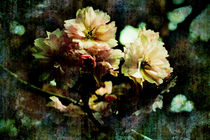 Flowering Cherry Texture by florin