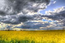 The Storms Approach  von David Pyatt