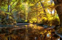 Teich im Wald von Frank  Jeßen