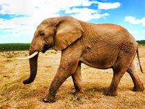 Elefant-ganz-nah