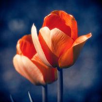Tulips Flowers von cinema4design
