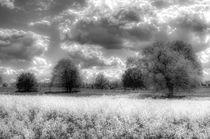 The Peaceful Farm  by David Pyatt