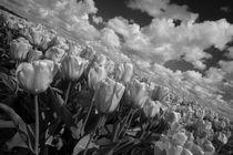 Mono Tulips  von Rob Hawkins