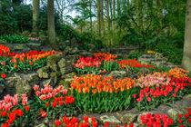 Tulip Rocks  von Rob Hawkins