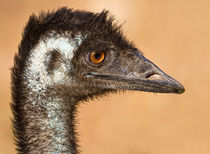 Close encouter of the Emu kind von mbk-wildlife-photography