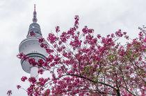 Hamburg im Frühling X von elbvue von elbvue