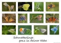 Poster Schmetterlinge von Carsten Meyerdierks