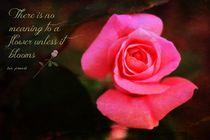 Zen Proverb 2 von Clare Bevan