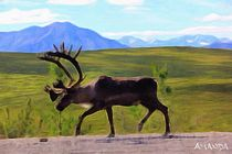 Caribou von Amanda Jones