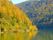 Herbst an der Donau in Oberösterreich von gscheffbuch