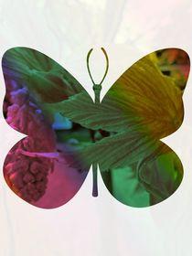Spring butterfly by Amanda Elizabeth  Sullivan