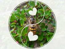 For the love of wasps von Amanda Elizabeth  Sullivan