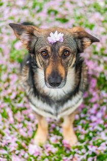 Hund im Frühling I von elbvue by elbvue