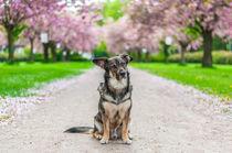 Hund im Frühling II von elbvue von elbvue