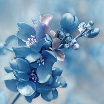 Blau  von Violetta Honkisz