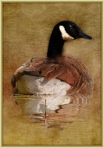 Goose Gliding On The Pond by constance lowery