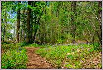 Flowered-path