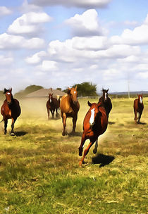 Das American Quarter Horse von Wolfgang Pfensig