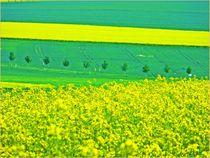 ~ Yello & Green Nature ~~ by Sandra  Vollmann
