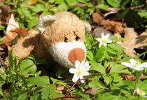 Blumenduft und Bärennase von Olga Sander