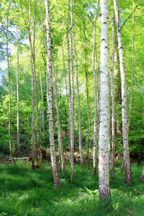 birch by Jens Berger