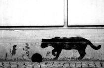 spray cat - sprühkatze / streetart poland  von mateart