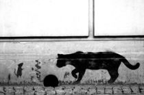 spray cat - sprühkatze / streetart poland  by mateart