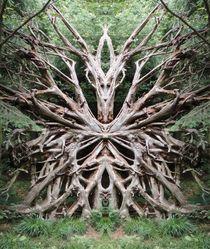 Baumwesen von Michael Bolz