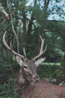 deer by alessia