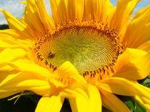 Sonnenblume mit Glückkäffer von Asri  Ballandat - Knobbe