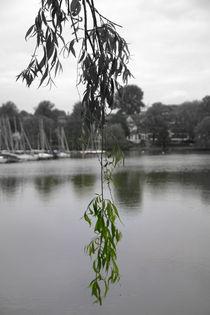 Tree Spot von uta-behnfeld