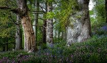Gnarled old trees von Leighton Collins