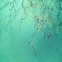 Newgreen
