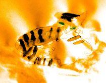 Tiger  von Maria-Anna  Ziehr
