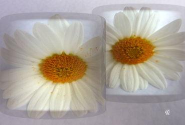 Blumeimglas